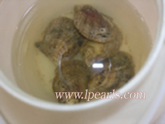 wish Pearls: jewelry pearl oysters with AA grade Round Open Oyster Shell With Pearl
