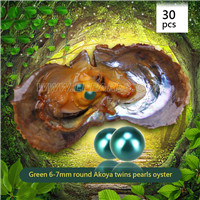 Fresh 6-7mm Round Akoya Green twin pearls oyster 30pcs